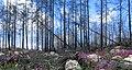 Hälleskogsbrännan juli 2016 (3579).jpg