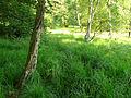 Hühnerfeld Moor.jpg
