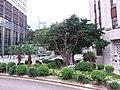 HK 中環 Central 香港中國銀行 舊大廈 Bank of China Building 德輔道中 Des Voeux Road near Queensway October 2018 SSG 04.jpg