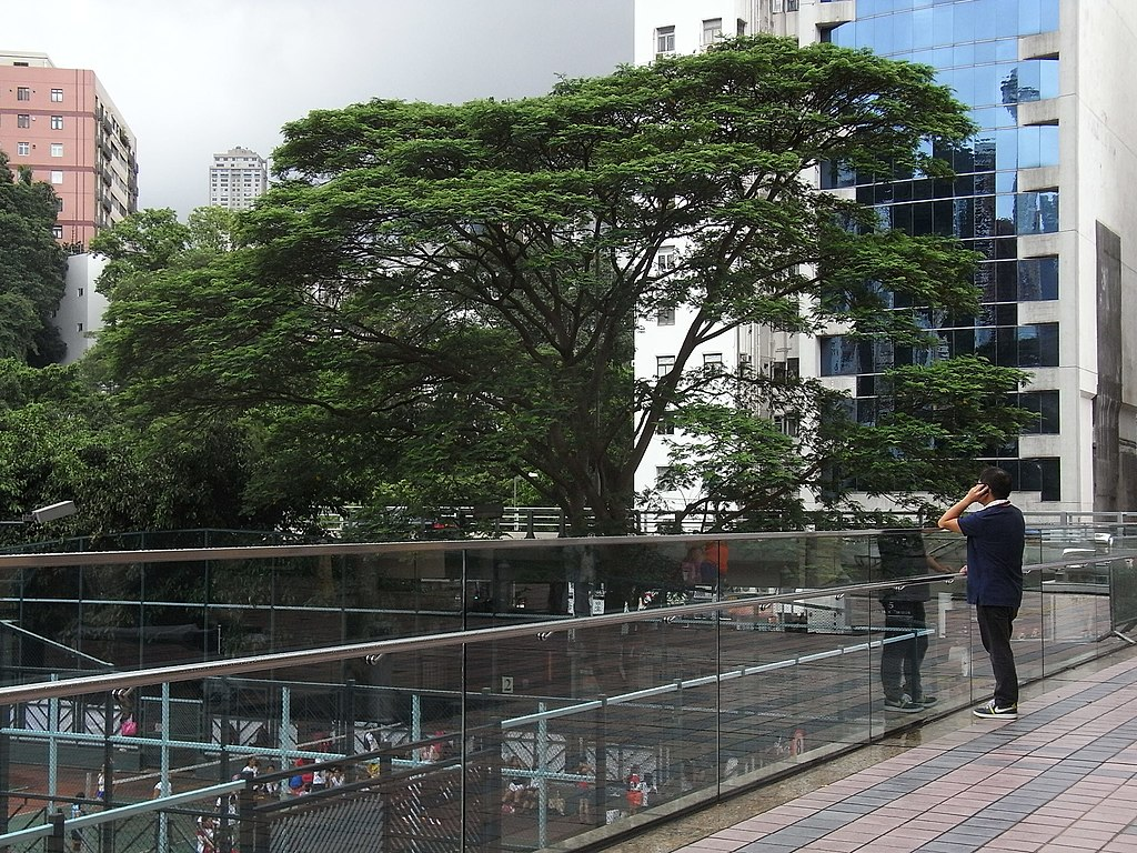File hk causeway bay hkcl terrace fence view tree crown for Terrace trees