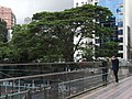 HK Causeway Bay HKCL terrace fence view tree crown visitor Aug-2012.JPG