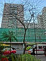 HK TST East evening 加連威老廣場 Granville Square tree n residential building facade March-2013.JPG
