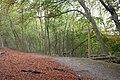 Hackhurst Downs - geograph.org.uk - 72214.jpg