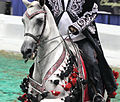 Half arabian native costume horse (8031637155).jpg