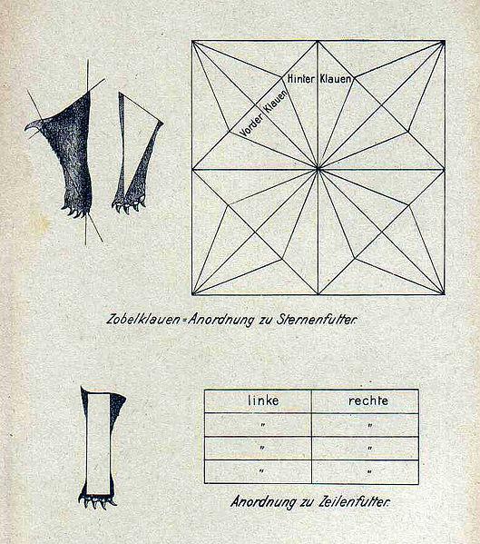 File:Handbuch Hanicke 66 (Ausschnitt).jpg