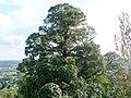 Hartberg L1490549a.jpg