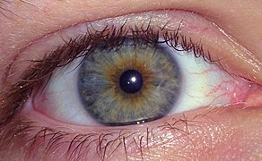 Hazel Eyes, Caucasian Male, Age 23.jpg