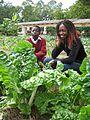 Healthy spinach in a school garden (urine fertilised) (5567570757).jpg