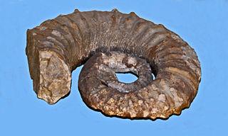 <i>Gassendiceras</i> genus of molluscs (fossil)