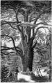 Hetzel Magasin1903 d193 Monographies végétales 4.png