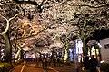 Hitachi Sakura Festival, Ibaraki 28.jpg