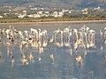 Holidays Greece - panoramio (410).jpg