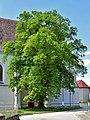 Hollabrunn - Enzersdorf im Thale - ND HL-018 - Winterlinde - 1.jpg