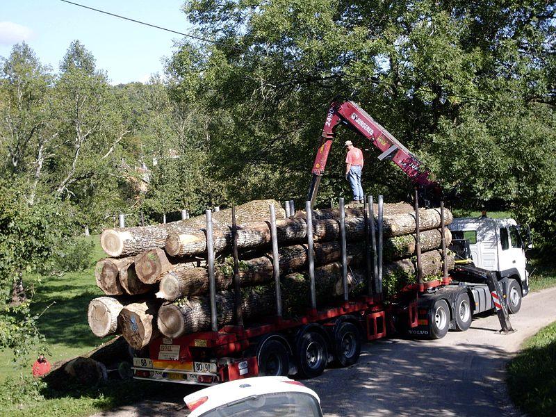 File:Holztransport 07.JPG