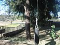 Home Made Tyre Swing Edmond Street.jpg