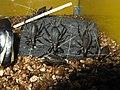 Homoeogryllus japonicus1.jpg