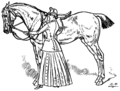Horsemanship for Women 049.png