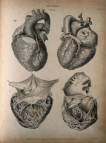File Human Heart Four Figures Engraving By T Milton