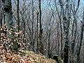 Humenec - panoramio.jpg