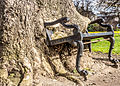 Hungry Tree at King's Inns, Dublin-12930865674.jpg