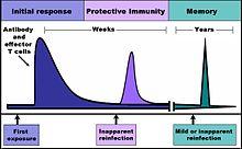 220px-Immune_response.jpg
