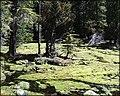 Imnaha Springs, Oregon.jpg