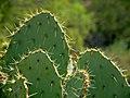 In Sonoran Desert, Beeline Highway Phoenix to Paysan (6557163415).jpg