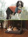 Insect Shield for Pets Premium Tee and Ultra Bed.jpg
