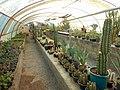 "Iran-qom-Cactus-The greenhouse of the thorn world گلخانه کاکتوس ""دنیای خار"" در روستای مبارک آباد قم- ایران 05.jpg"