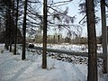 Irkutsk. Akademgorodok. February 2013 - panoramio (120).jpg