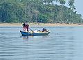 Irrawaddy Dolphin (Orcaella brevirostris) interested by fisherman catch (15658212230).jpg