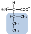 Isoleucine w functional group highlighted.png