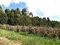 Itupeva - panoramio (208).jpg
