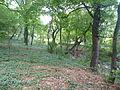 Jókai kertje 2012 (44).JPG