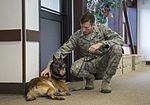JBER military working dog teams hone their capabilities during annual certification 161014-F-YH552-027.jpg