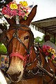 "Jackson Square ""Party Horse,"" New Orleans, Louisiana, U.S.A.jpg"