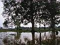 Jambi-indonesia-swamp.jpg