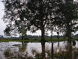 Jambi-indonesia-swamp.jpg
