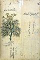 Japanese Herbal, 17th century Wellcome L0030076.jpg