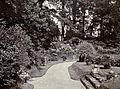 Japanese Iris Garden Lowther Castle 1911.jpg
