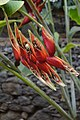 Jardim Botânico da Madeira DSC 0364 (14719778843).jpg