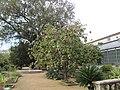 Jardim Botanico da Ajuda (14009253154).jpg