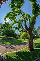 Jardin anglais de Vesoul 16.jpg
