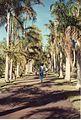 Jardin de Pamplemousses (3000880659).jpg