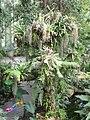 Jardin des plantes Paris Serre tropicale7.JPG