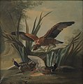 Jean-Baptiste Oudry - A Hawk Puncing on a Pair of Ducks - KMS1005 - Statens Museum for Kunst.jpg