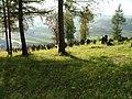 Jewish cemetery in Bobowa6.jpg