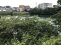 Jizoike Pond near Kyushu Sangyo University.jpg