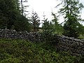 Junction of stone walls in Turk Wood - geograph.org.uk - 413654.jpg