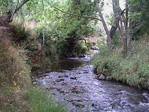 Kaikorai Stream - Kaikorai Stream, Dunedin